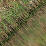 green den naturliga modellen Royaltyfri Bild