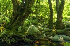 Green den steniga skogen arkivfoton