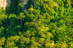 Green dense forest grows. On top of a cliff Royalty Free Stock Images