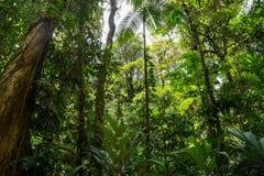 Green dense jungle Stock Photos