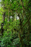 Green dense jungle Stock Photo