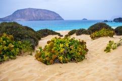 Green desert plant on the beach sand stock photo
