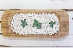 Desert rose on white pebbles inside a wooden bowl Stock Photos