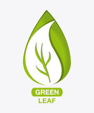 Green design. leaf icon. White background, graphic vector Stock Images