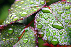 Green dew wet leaves Royalty Free Stock Photos
