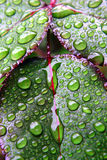 Green dew wet leaves Stock Image