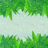 Green dewy leaves with copy space. Green leaves forming top and bottom border with copy space covered in dew drops Stock Image
