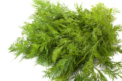 Green dill Royalty Free Stock Photo