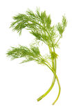 Green dill Royalty Free Stock Photos