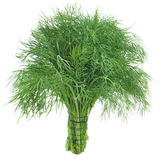 Green dill Stock Photography