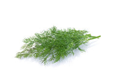 Free Green Dill Stock Images - 36679054
