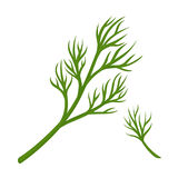 Green dill branch. Vector illustration of branch of green fresh dill isolated on white Royalty Free Stock Images