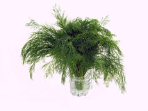 Green  dill Royalty Free Stock Photography
