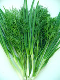Green dill and green onion. Fresh appetizing tasty green dill and green onion Stock Photo