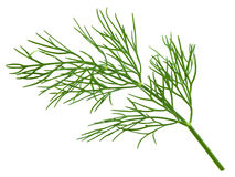 Green dill isolated Royalty Free Stock Image