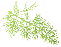 Green dill isolated on a white background. Stock Photography