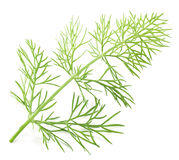 Green dill isolated on a white background. Royalty Free Stock Photos