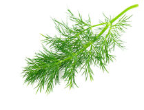 Green dill. Isolated on white background. Studio macro Stock Images