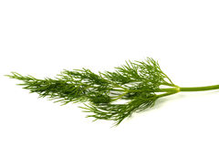 Green dill leaf Royalty Free Stock Photos