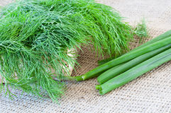 Green dill and onions Stock Photography