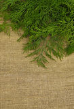 Green dill on the rough fabric as the background Royalty Free Stock Photography