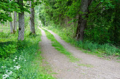 Green dirt road. In scandinavia Royalty Free Stock Photography