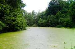 Green dirty pond Royalty Free Stock Photos