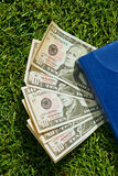 Green dollars on the grass. American dollar bills lying on the green grass, pressed blue corner organizer Stock Photos
