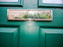 Green door with reflection. Of metal letterbox Stock Image