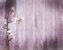 Green door with spots. Vintage pink wood background spring almond flowers with shabby distressed grungy texture hippie style Stock Image