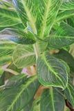 Green doorbladert Stock Foto's