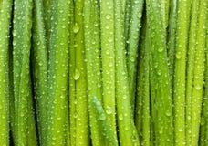 Green doorbladert met dalingen royalty-vrije stock afbeelding