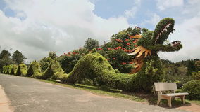 A green dragon made of bush, in a park of flowers. Dalat Vietnam stock footage