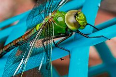 Green Dragonfly Stock Image