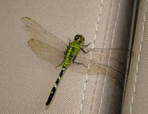 Green dragonfly on car seat Stock Photography