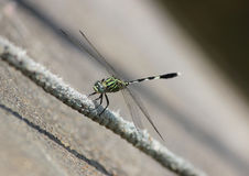 A green dragonfly. Vibrant green dragonfly with wings and robotic design Stock Photography