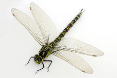 Green dragonfly on white Stock Photo