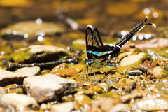 Green dragontail butterfly Stock Photography