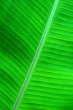 Green dream Stock Photos