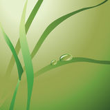 Green drops on the leaves. Illustration Royalty Free Stock Image
