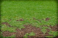 Green and dry grass,Patterned field of green grass sports field Royalty Free Stock Images