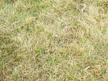 Green and dry grass Stock Images