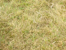 Green and dry grass Royalty Free Stock Photography