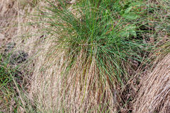 Green and dry grass Stock Photography