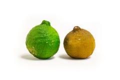 Green and dry rot bergamot Royalty Free Stock Image