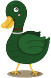 Green duck Royalty Free Stock Photo