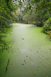 Green duckweed covers small pond Stock Photo