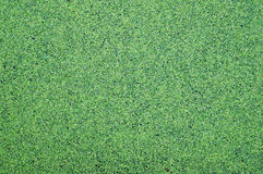 Green Duckweed nature background Stock Images