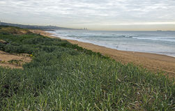Green Dune Vegetation on Overcast Coastal Landscape Royalty Free Stock Images