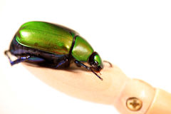 Green dung beetle Stock Photography